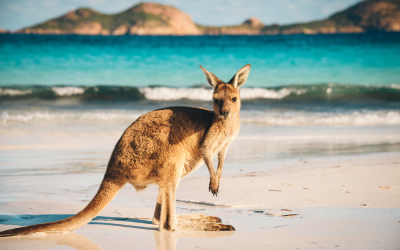 How To Move From Ireland To Australia – The Four Essential Steps
